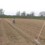 semina e interramento a mano